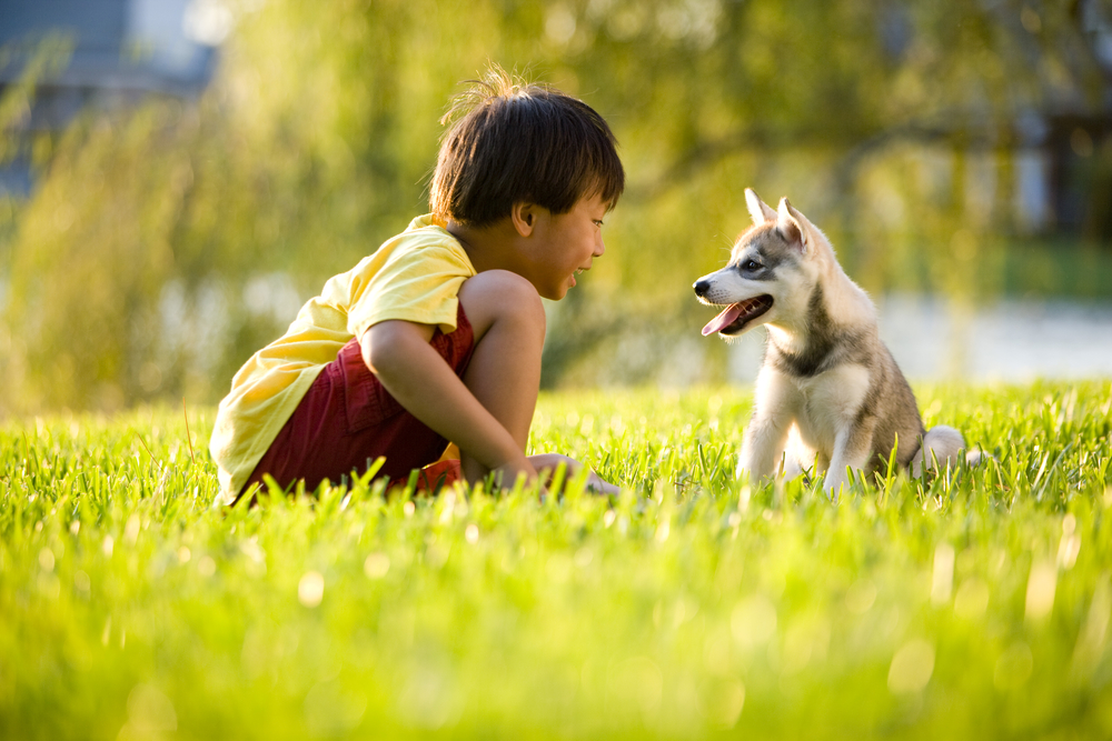 Taking Care of Your Pet Can Improve Your Health