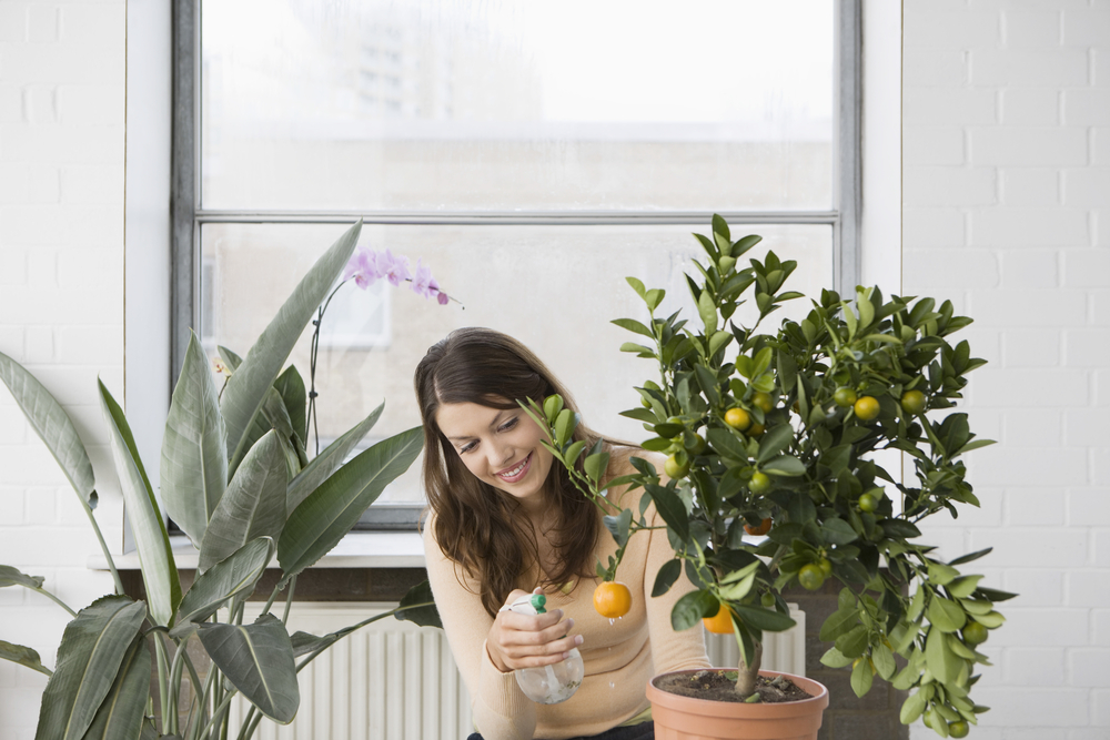 5 Ways Houseplants Improve Health